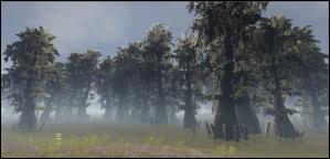 Swamp_trees